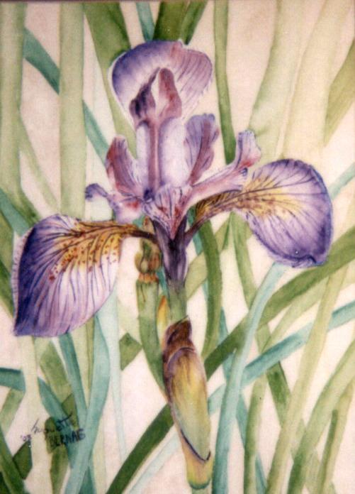 <i>L'iris versicolore</i><br />aquarelle sur papier Arches, 2003, 36 x 25 cm <br />collection privée